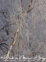 rijp_op_bomen_ripe_on_trees_1_20141219_2008452992