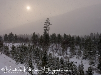 sneeuwstorm_snowstorm_20141219_1257356131