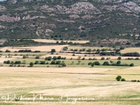 lijnenspel_in_spaans_landschap_spanish_pyrenean_landscape_8_20141219_1057264828