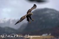 zeearend_-_white-tailed_eagle_-_haliaeetus_albicilla__20150112_1927480472