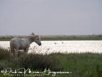 camargue_paard_wild_horse__20141220_1813658539