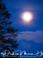 volle_maan-full_moon-vollmond_20160501_1683200233