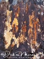 korstmos-lichen-flechte-lichenen_20160501_1471725107