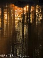 spiegeling_zonsopkomst_-_sunrise_-_sonneanstieg_20171015_1104968430