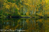 spiegeling_van_berken_-_birch_reflection_-_barke_reflexion_20171015_1794646027