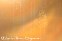 laatste_zonlicht-last_sunlight-letztes_sonnenlicht_20180625_1499203456