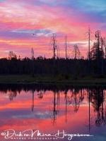 zonsondergang_wild_brown_bear_center_3_20180625_1210997877
