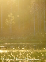 witte_wieven-mist_in_forrest-nebel_im_wald_4_20180625_1171112284