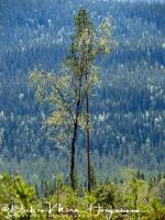 bomen_liefde-tree_love-_baumen_liebe_20180625_1899628514